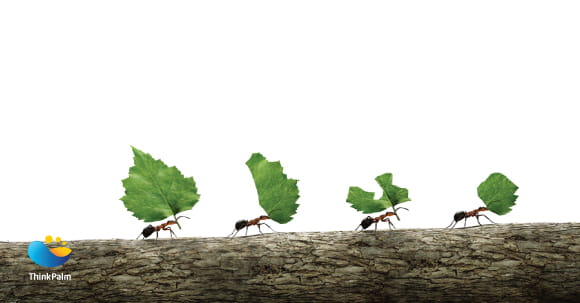 Ant Philosophy - ThinkPalm's Nature Driven Success Mantra